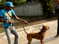 Vybz Kartel Playing With His Pitbull That Bite Him During Alleged Murder
