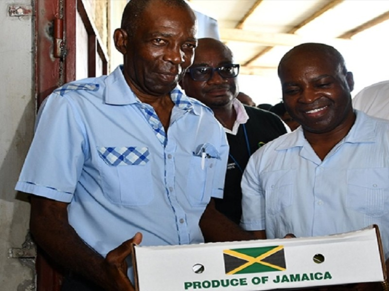 First shipment of Jamaican mangoes off to the US in 20 years